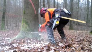 Logging with Husqvarna 576 XP AT - Ported