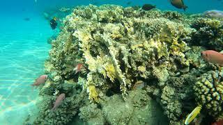 Коралловый риф гостиницы Новотель Бич Novotel Beach 5 Шарм эш Шейх Красное море 2021