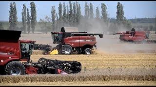 Žně 2017 - 3 kombajny Case IH | wheat harvest 2017