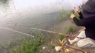 Petualangan Liar Memancing Ikan Mujaer