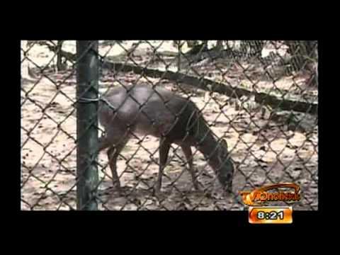 Seccion Nuestra BIOSFERA: El Zoologico San José - 19 Marzo 2012
