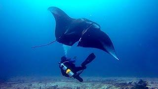 Gopro: deep sea manta ray rescue