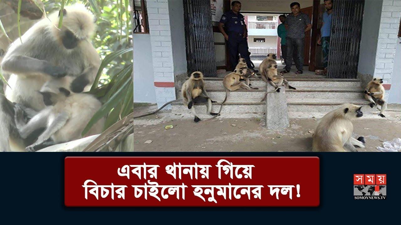 বিচার চাইতে থানায় গিয়ে হাজির হনুমানের দল! | Amazing Monkey | Somoy TV
