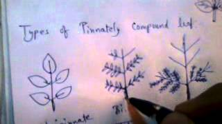 Terminology of Plant Taxonomy in Hindi For BSc II Sem 3