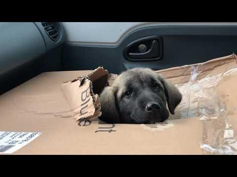 Sokağa terk edilmiş yavru köpeği gördüm dayanamadım aldım adını Yetim koydum.. #puppy#welpe#köpekler