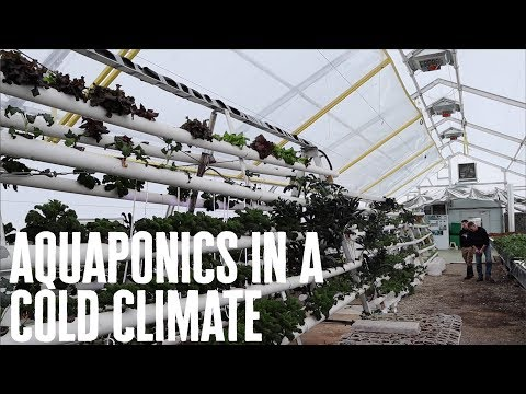 Aquaponics in a Cold Climate