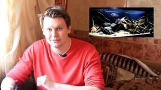 Интерактивный аквариумный туризм сезон 2 - Итоги 1/5 (Александр Полимонов)