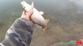 Рыбалка с берега 2021 донки ловим сазана и другую рыбу
