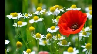 Гармония и красота природы (музыка и видео)(Самые смешные, прикольные и захватывающие видео-ролики! И еще... приоткроем секрет.)) Все видео на этом канал..., 2015-01-29T14:37:02.000Z)
