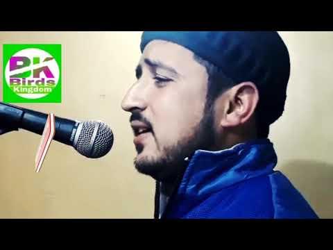 wala wala maharazo || new kashmiri song by basharat nowabazar