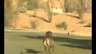 DOG TRAINING - CAN YOU GET YOUR DOG TO JUMP OVER A SPRINKLER?