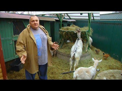 Как содержать в домашних условиях коз