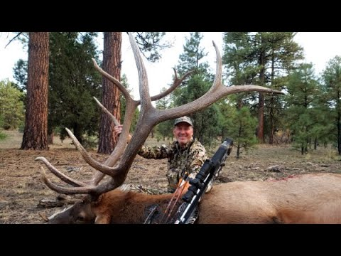 2020 New Mexico Archery Elk Season | Bowhunting For Elk