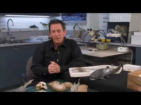 Nature   Live Birth in the Devonian