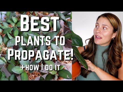 Best Houseplants to Propagate & HOW I do it!   My Favorite plants to propagate!