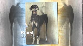 Kanni Dog Breed