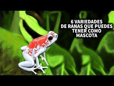 6 VARIEDADES DE RANAS QUE PUEDES TENER DE MASCOTAS | AcuariosLP