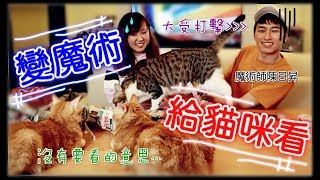 【Annie】Do Magic to Cats? Absolutely Got Ignored! (Feat.Sunny)