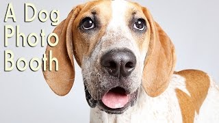 Humane Society Of Utah Photo Booth Connects Shelter Dogs With Forever Homes