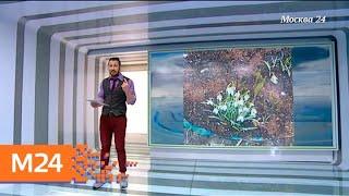 """""""Климат-контроль"""": какая погода ожидает москвичей в начале апреля - Москва 24"""