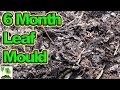 How To Make Leaf Mould In 6 Months