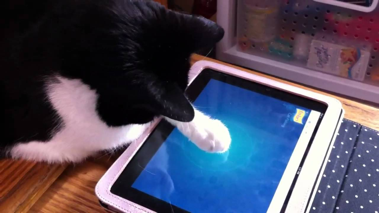 Games For Cats Ipad Friskies