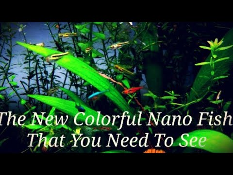 The 21 Most Colorful Nano Fish & Shrimp In My Ideal Planted Nano Tank! +Get Your Nano Fish To School