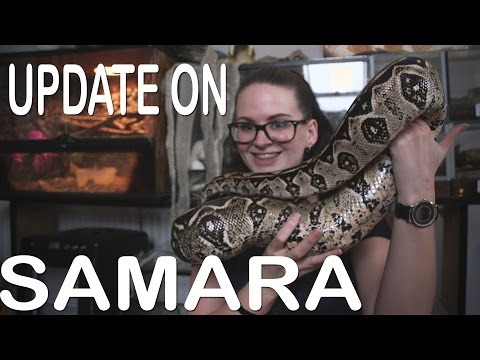 UPDATE ON SAMARA (My female bci)