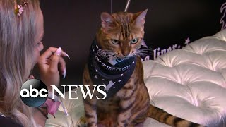 CatCon 2019: World's most famous Instagram cats and feline lovers gather I Nightline