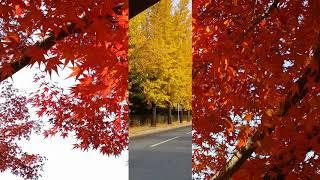 신승훈 - 가을빛 추억
