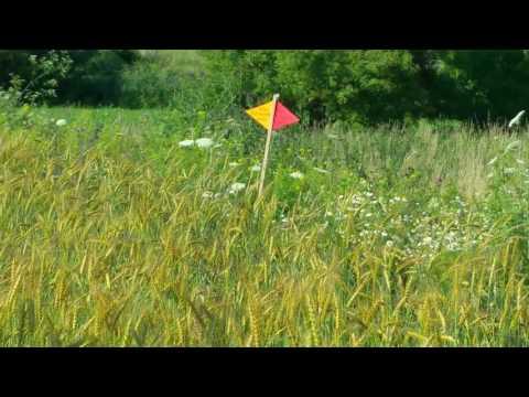 Das schmeckt den Spatzen: Weizen auf dem Weltacker | 2000 m²