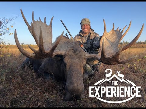 Alaskan Wilderness Dream -GIANT  Moose, And Interior Grizzly Bear - With Dillinger River Outfitters