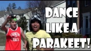 OMG PARAKEET! (Knock Knock) (Tik-Tok Ke$ha Parody)