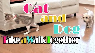 Cats Meet A Dog【cat And Dog Take A Walk Together】 猫と犬が出会う【かわいい猫】【犬と猫】