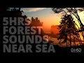 5 Hrs Forest Sounds Near Sea