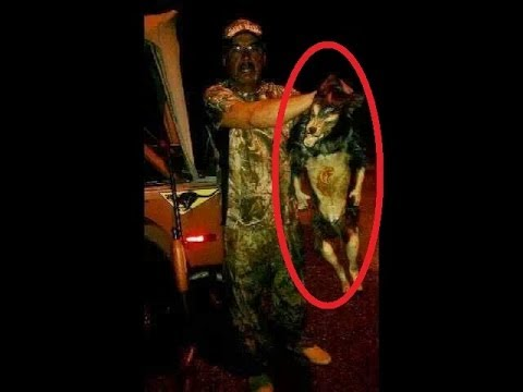 Real Demon Dog Captured In Mexico Youtube