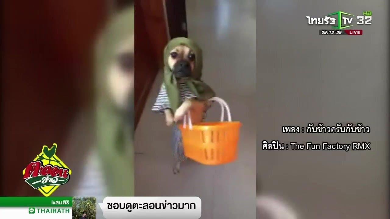 ตะลอนข่าวขำขำ : เจ๋งสุดๆ ลีลาหมาสุดน่ารัก | 09-01-62 | ตะลอนข่าว
