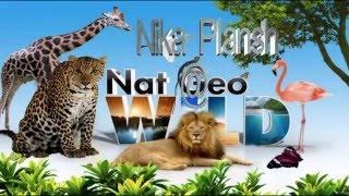 Животные для самых маленьких. Голоса животных мира.Wild animals.