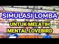 Simulasi Lomba Untuk Melatih Mental Lovebird  Mp3 - Mp4 Download