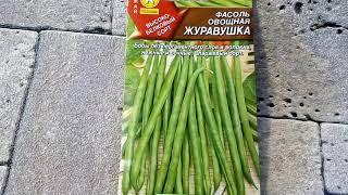 Фасоль овощная Журавушка - ознакомление
