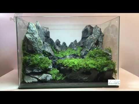 Aquascaping réalisation - Laurent Garcia - Aquarilis