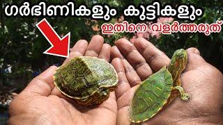 രണ്ടു അടിപൊളി ആമകളെ മേടിച്ചു🐢 💥🔥 | How To make a turtle pond | Malayalam