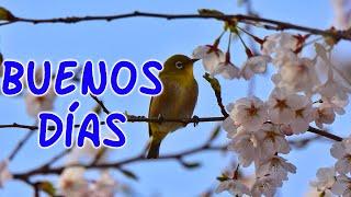 Lindos Saludos de Buenos Dias - Abre Tiene las Frases mas Hermosas Para Ti