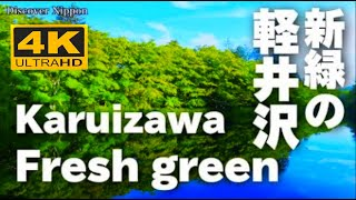 [4K]軽井沢の森と水 Karuizawa of forest and water  軽井沢観光 Travel guide 輕井澤 雲場池 万平ホテル 癒しの森 碓氷峠
