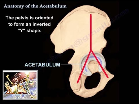 Anatomy Of The Acetabulum Everything You Need To Know Dr Nabil