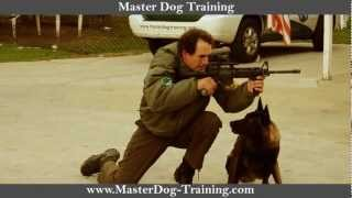 K9 Police Tactics - Master Dog Training