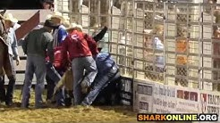 Horse killed at the Cowtown Rodeo