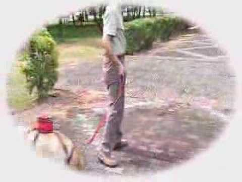 The Amazing Dog Poop Ass-Bag