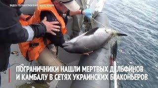 Пограничники нашли мертвых дельфинов в сетях украинских браконьеров