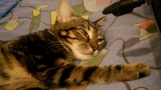 Вот так моя кошка спит с открытыми глазами))